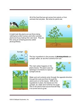 How Plants Make Food