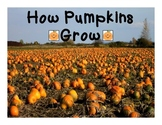 How Pumpkins Grow