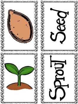 How Pumpkins Grow (A Sight Word Emergent Reader)