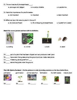 How Seed Plants Reproduce Assessment