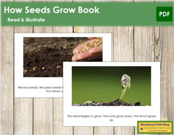 How Seeds Grow: Read and Illustrate