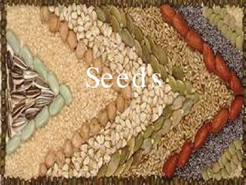 How Seeds Travel 4th Grade Life Science 3b