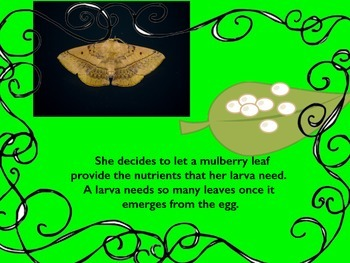 How Silk Is Made:  A silkworm's journey