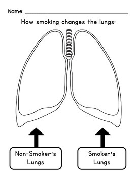 How Smoking Changes the Lungs