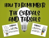 How To Remember the Carpals and Tarsals!