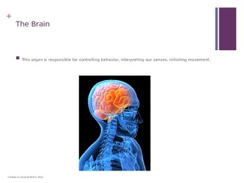 How We Learn Powerpoint (Teaching students how their brain works)