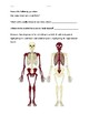 How Your Bones and Skeleton Work