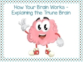 How Your Brain Works - Explaining the Triune Brain