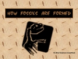 How a Fossil is Formed