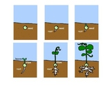 How a Plant Grows- Sequencing Cards