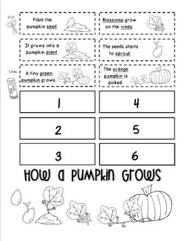 How a Pumpkin Grows (Life Cyle of a Pumpkin) Packet