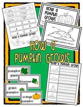 How a Pumpkin Grows (Life Cyle of a Pumpkin) Packet