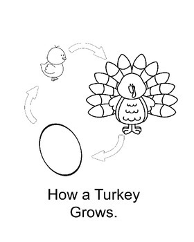 How a Turkey Grows