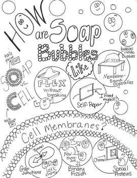 How are Soap Bubbles Like Cell Membranes Sketch Notes Doodle Notes