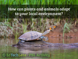 How can plants and animals adapt to your local environment?