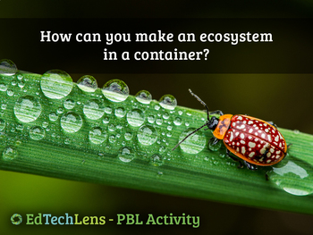 How can you make an ecosystem in a container?