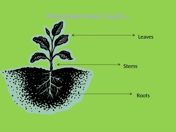 How do Plants Live and Grow ppt