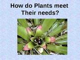 How do Plants meet their needs