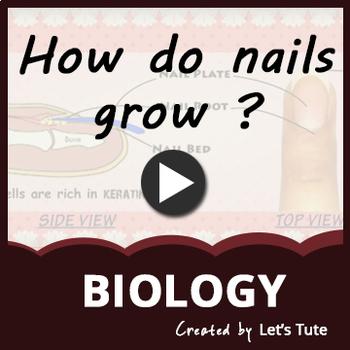 How do nails grow?