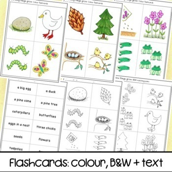 How living things grow matching pairs game