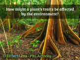 How might a plant's traits be affected by the environment?