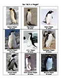 How tall are penguins?