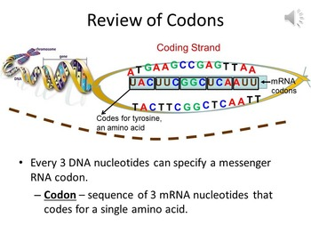 How the Genetic Code is Optimized to Protect Against Mutations