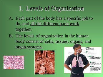 How the Human Body is Organized PPT