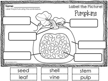 How to Carve a Pumpkin Writing
