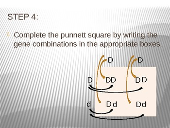 How to Create a Punnett Square PowerPoint