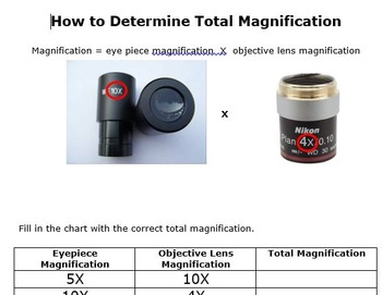 How to Determine the Magnification of a Microscope