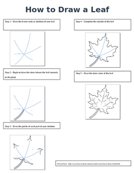 How to Diagram a Leaf
