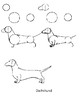 How-to-Draw: Dog Breeds