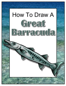 How to Draw a Great Barracuda
