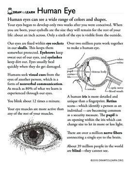 How to Draw a Human Eye Worksheet by Dawn Pedersen Artist | TpT