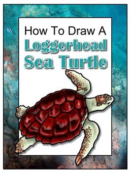How to Draw a Loggerhead Sea Turtle