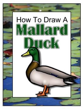 How to Draw a Mallard Duck