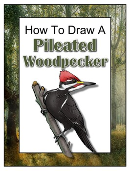 How to Draw a Pileated Woodpecker