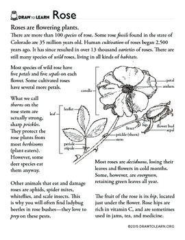 How to Draw a Rose Worksheet