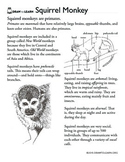 How to Draw a Squirrel Monkey Worksheet