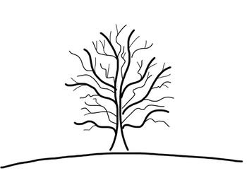How to Draw a Tree - Step by Step Guide