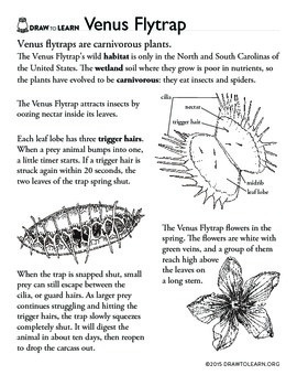 Venus teaching resources teachers pay teachers how to draw a venus flytrap worksheet ccuart Choice Image