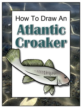 How to Draw an Atlantic Croaker