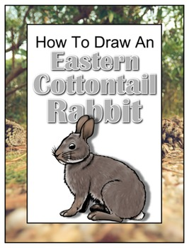 How to Draw an Eastern Cottontail Rabbit