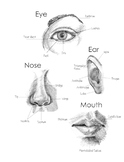 How to Draw and Shade Facial Features front and side view