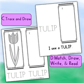 How to Draw using lines & curves: Free Sample Tulip, from Print Path