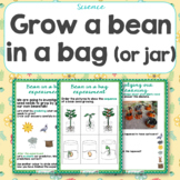 How to Grow a Bean in a Bag
