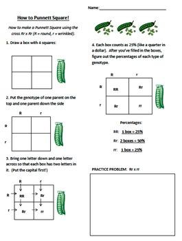How to Punnett and Punnett Task Cards