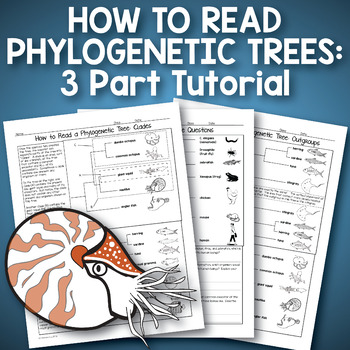 How to Read a Phylogenetic Tree: 3 Part Activity