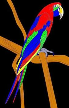 How to draw and paint a colorful Parrot